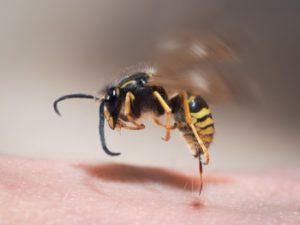 аллергия на укус осы