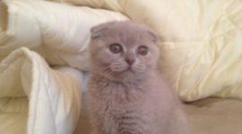 О питании домашней кошки