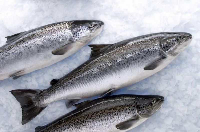 Свежемороженая рыба с доставкой на дом в СПб
